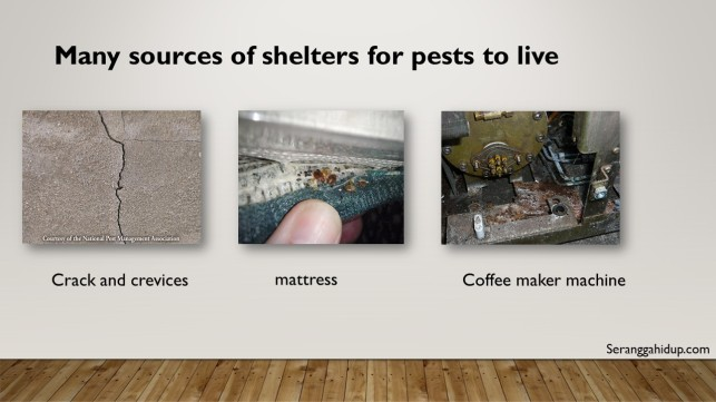 type of shelter